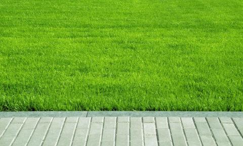 Færdiglagt rullegræs