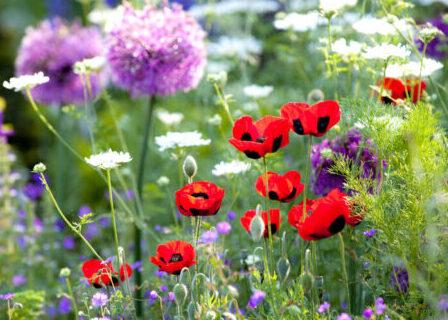 Have med vilde blomster