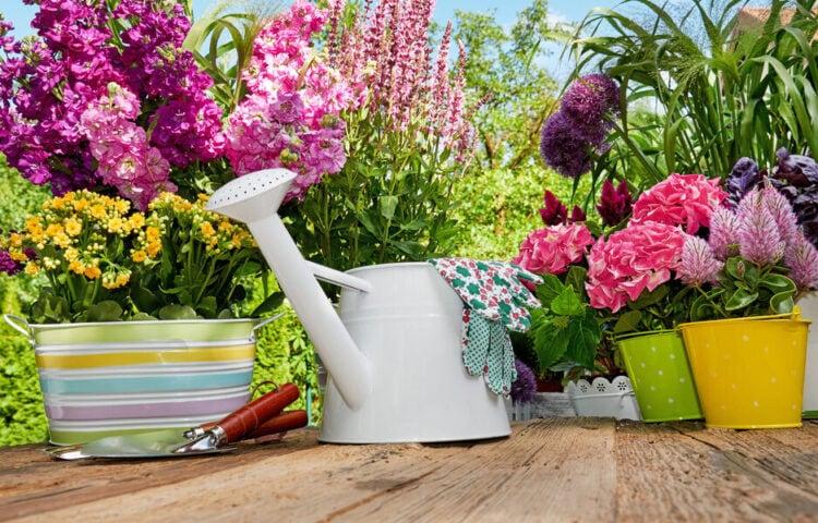 Planter, blomster og redskaber